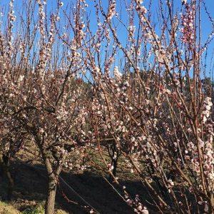 A chamar a primavera!!!